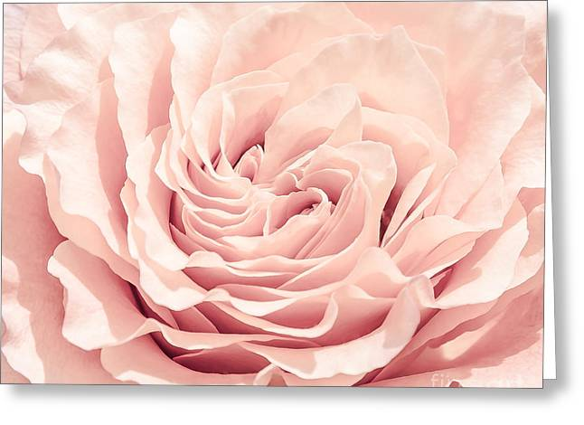 Squared Pyrography Greeting Cards - Pink Rose Greeting Card by Olga Photography