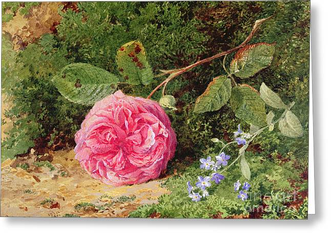 Pink Rose On A Mossy Bank Greeting Card by Henry Sutton Palmer
