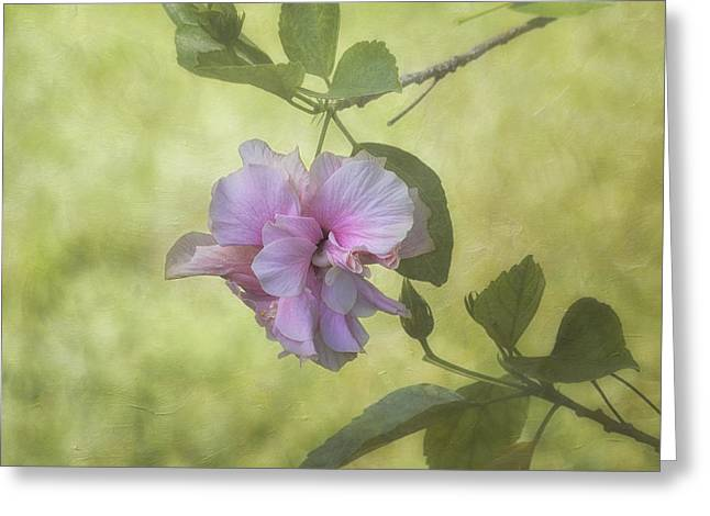 Scenic Greeting Cards - Pink Ruffles Greeting Card by Kim Hojnacki