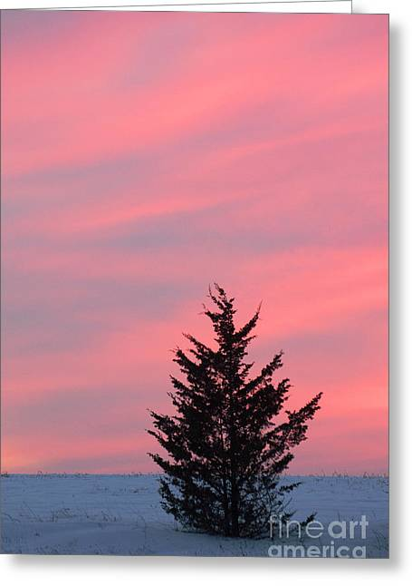 Award Digital Greeting Cards - Pink skies Greeting Card by Anahi DeCanio - ArtyZen Studios