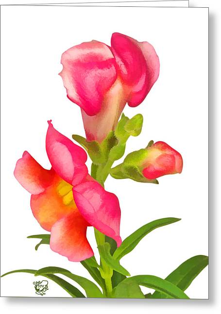 Photomanip Greeting Cards - Pink Snapdragon Greeting Card by Stephen Kinsey