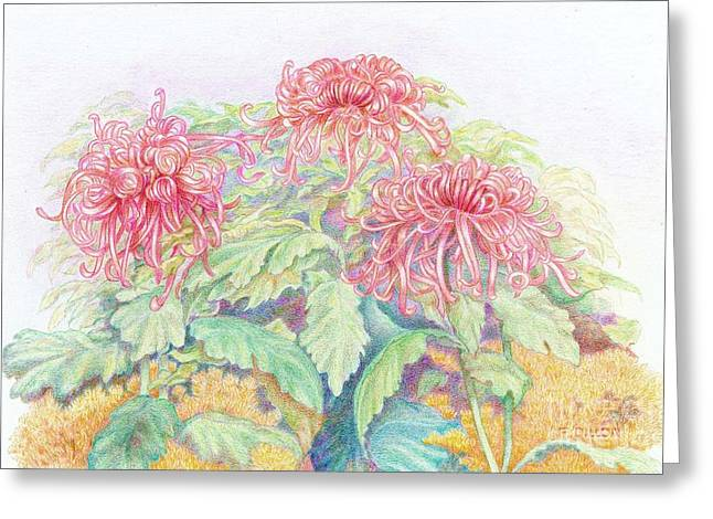 Aster Drawings Greeting Cards - Pink Spider Mums Greeting Card by Frances  Dillon