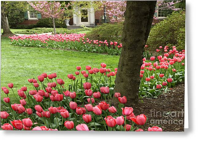 Spring Bulbs Greeting Cards - Pink Spring Garden Greeting Card by CJ McKendry