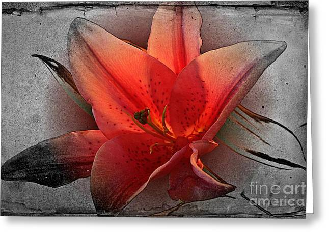 Stigma Greeting Cards - Pink Star Greeting Card by Clare Bevan
