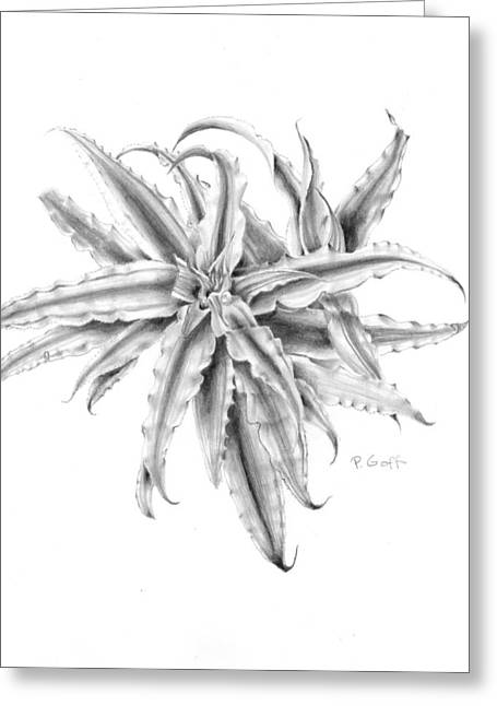 Bromeliad Drawings Greeting Cards - Pink Star in Gray Greeting Card by Penrith Goff