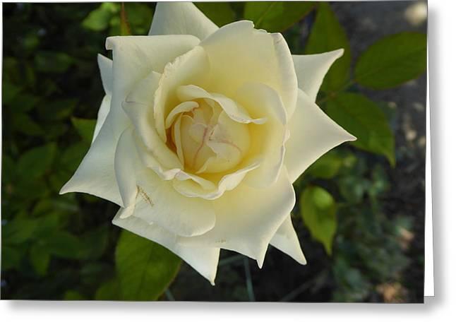 Rose Petals Greeting Cards - Pink Stria Greeting Card by David Givens