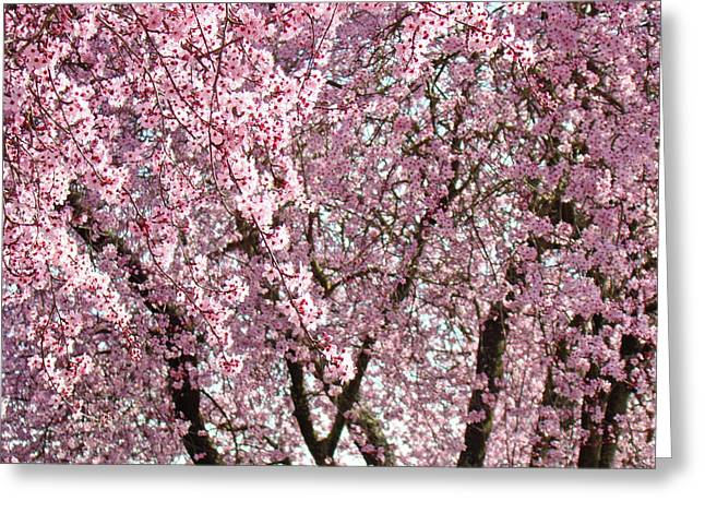 Colorful Trees Greeting Cards - Pink Tree Blossom Landscape Spring art prints Baslee Troutman Greeting Card by Baslee Troutman