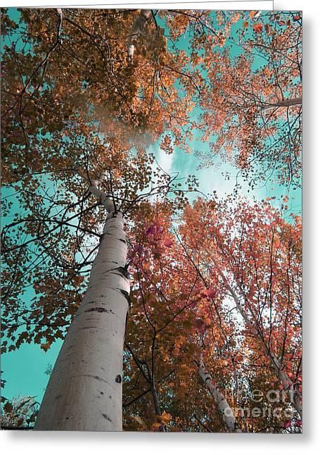 Landscape Framed Prints Greeting Cards - Pink tree Greeting Card by France Laliberte