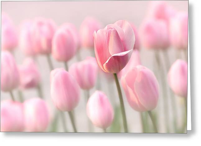Recently Sold -  - Close Focus Floral Greeting Cards - Pink Tulip Cloud Greeting Card by Mary Jo Allen