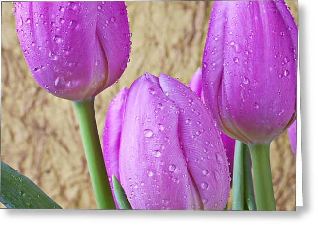 Pink Tulips Greeting Card by Garry Gay