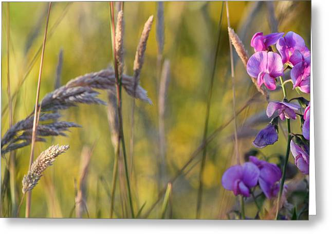 Grassy Field Greeting Cards - Pink Vetch Greeting Card by Bonnie Bruno