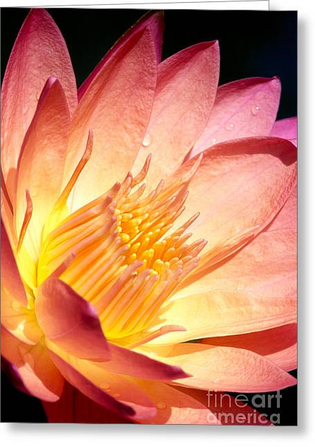 Waterlily Stamen Greeting Cards - Pink Water Lily Greeting Card by Bill Brennan - Printscapes