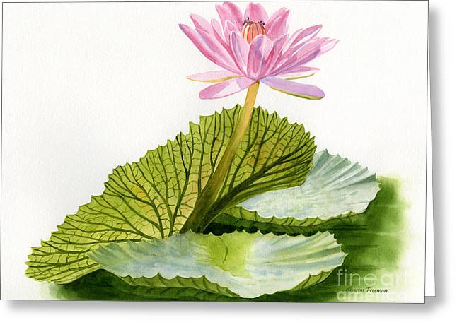Pink Blossoms Greeting Cards - Pink Water Lily with Textured Pads Greeting Card by Sharon Freeman