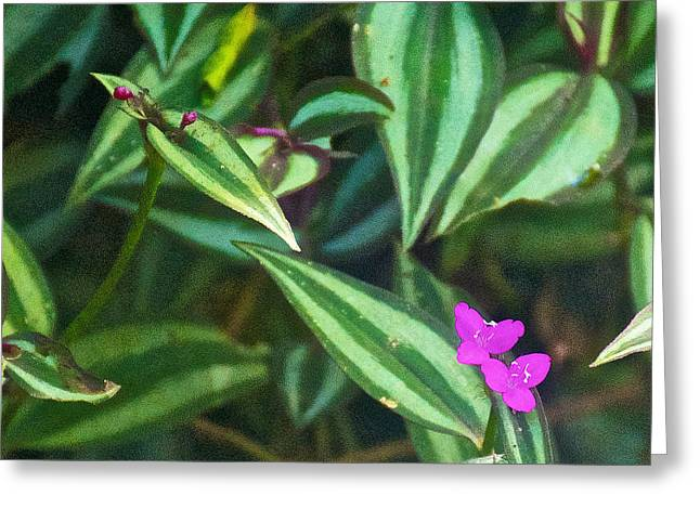 Wildfowers Greeting Cards - Pink Wildflowers in Iguazu Falls National Park-Argentina Greeting Card by Ruth Hager