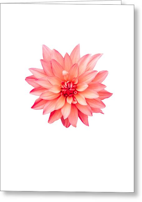 Flower Design Greeting Cards - Pinky Greeting Card by Heather Joyce Morrill