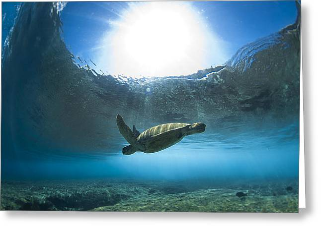 Pipe Turtle Glide  -  Part 1 Of 3 Greeting Card by Sean Davey