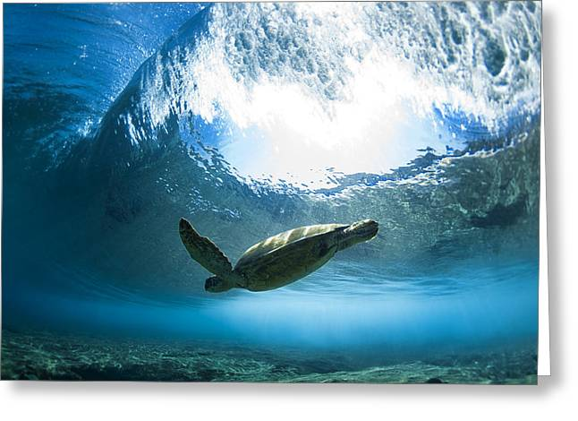 Clean Water Greeting Cards - Pipe Turtle Glide Greeting Card by Sean Davey