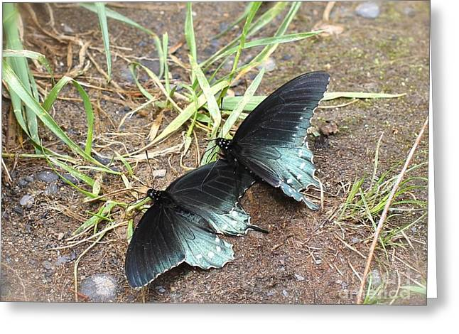 Recently Sold -  - Smokey Mountain Drive Greeting Cards - Pipevine Swallowtail Greeting Card by Robin Erisman
