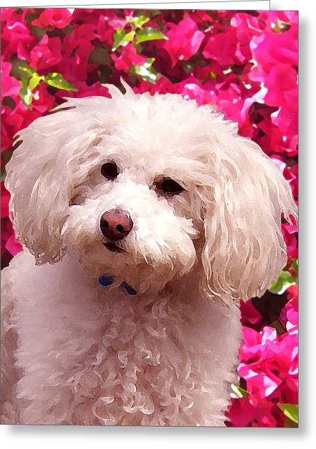 Cute Animal Portraits Greeting Cards - Pippy  Greeting Card by Amy Vangsgard