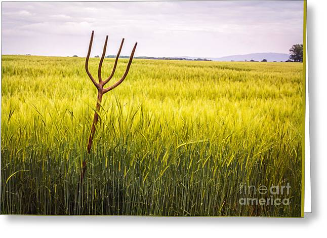Pitch Fork In Wheat Field Greeting Card by Amanda Elwell