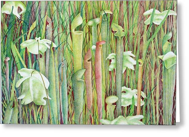 Pitcher Drawings Greeting Cards - Pitcher Plant Bog Greeting Card by Robin Veerkamp
