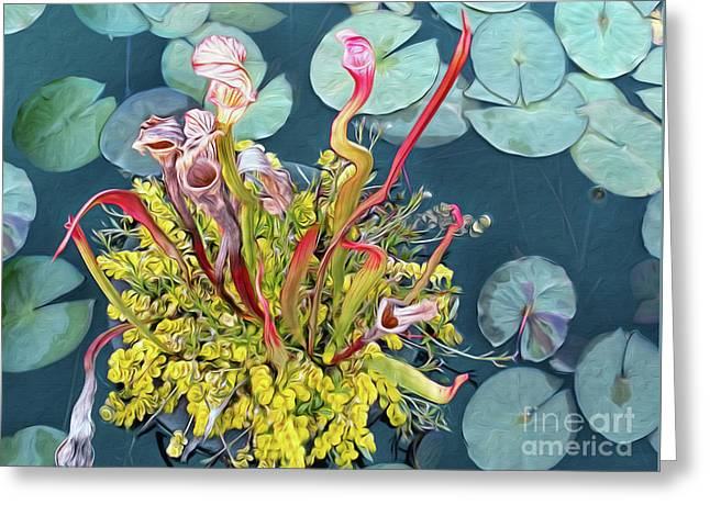 Pitcher Plants And Lily Pads By Kaye Menner Greeting Card by Kaye Menner