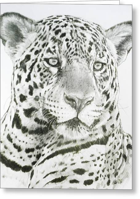 Jaguars Greeting Cards - Placate Greeting Card by Barbara Keith