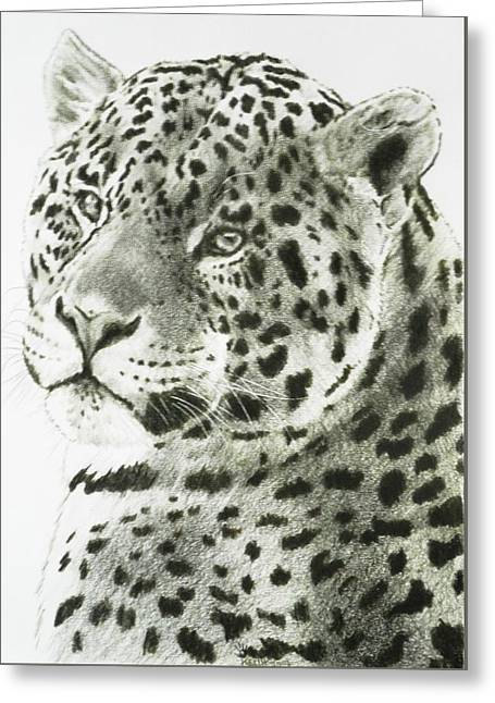 Jaguars Greeting Cards - Placid Greeting Card by Barbara Keith