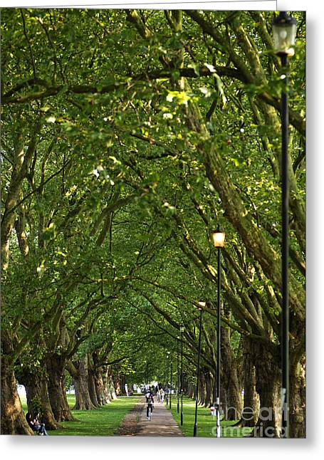 Plane Tree Lane Greeting Card by Helmut Meyer zur Capellen