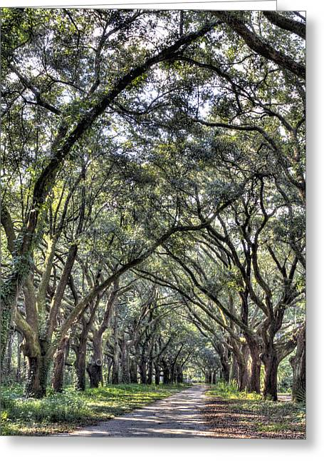 Plantation Greeting Cards - Plantation Drive Greeting Card by Dustin K Ryan