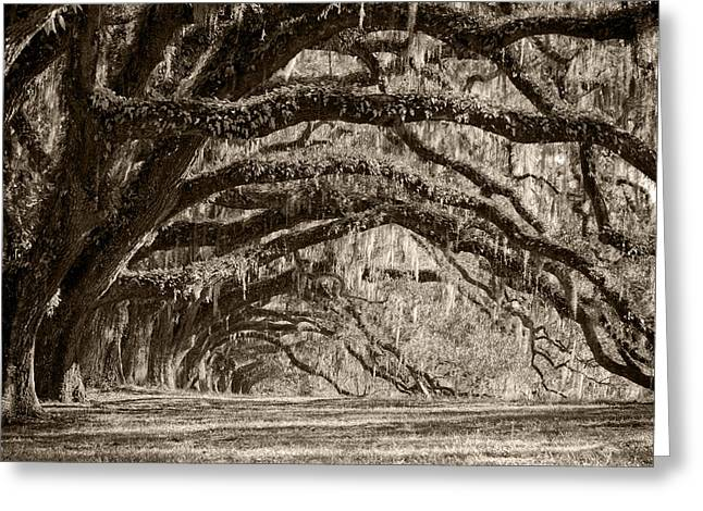 Plantation Drive Live Oaks Greeting Card by Dustin K Ryan