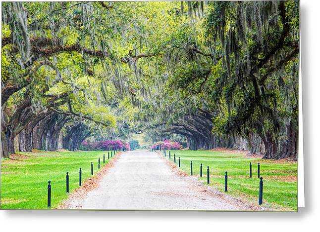 Plantation Greeting Card by Eggers   Photography