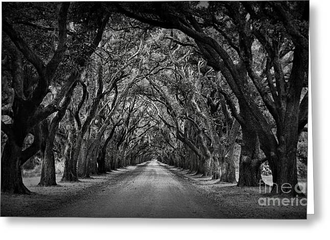 Oak Alley Greeting Cards - Plantation Oak Alley Greeting Card by Perry Webster