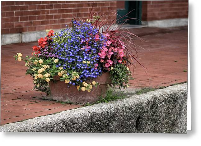 Flower Planter Greeting Cards - Planter Greeting Card by James Barber