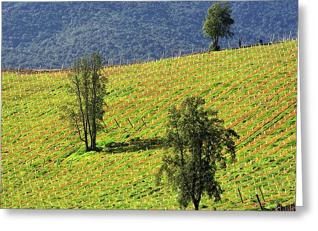Planting A Vineyard Greeting Card by Fernando Lopez Lago