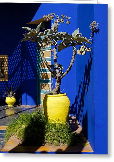 Plants And Majorelle Blue Greeting Card by Aivar Mikko