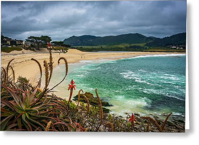 Big Sur Greeting Cards - Plants and view of a beach in Carmel California Greeting Card by Jon Bilous