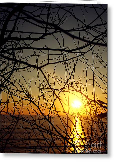 Warm Summer Greeting Cards - Plants on Sunset Greeting Card by Carlos Caetano