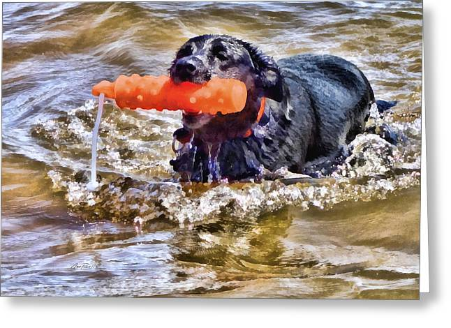 Dog In Lake Greeting Cards - Play Fetch - animals - dogs  Greeting Card by Ann Powell