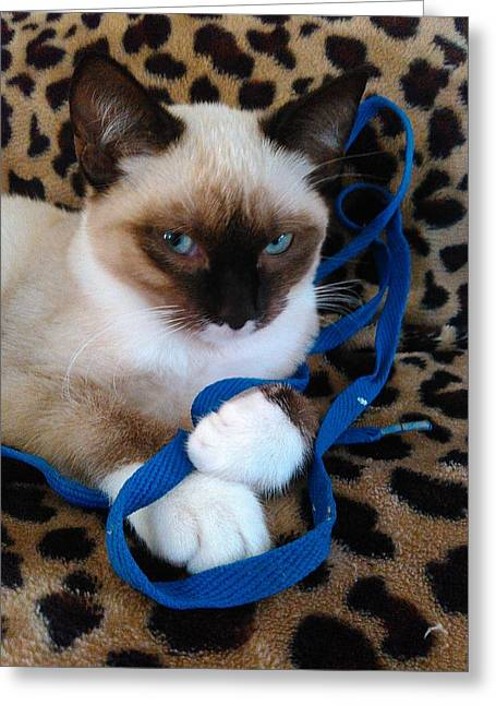 Becky Greeting Cards - Playful Blue Eyes Siamese Greeting Card by Becky Burt