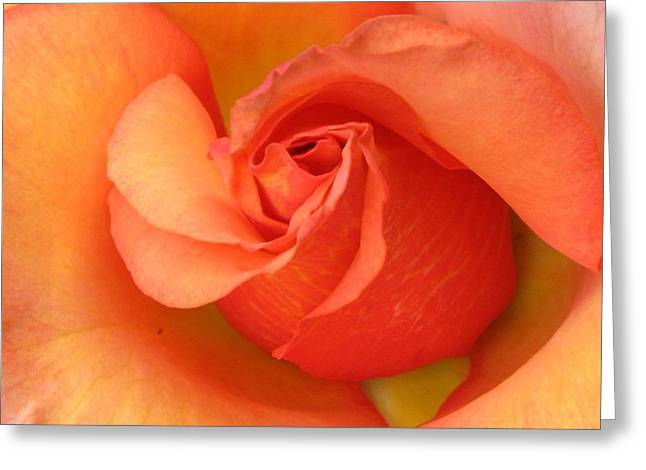 Apricot Greeting Cards - Playful Greeting Card by Carol Sweetwood
