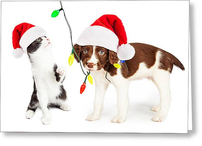 Playful Christmas Kitten And Puppy Greeting Card by Susan Schmitz