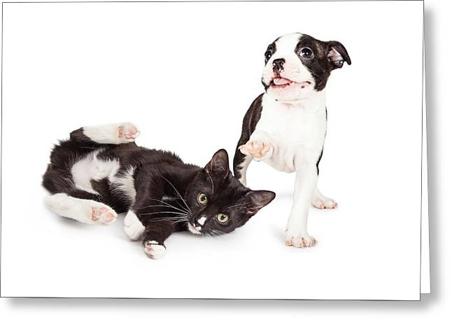 Playful Kitten And Puppy Playing Greeting Card by Susan Schmitz