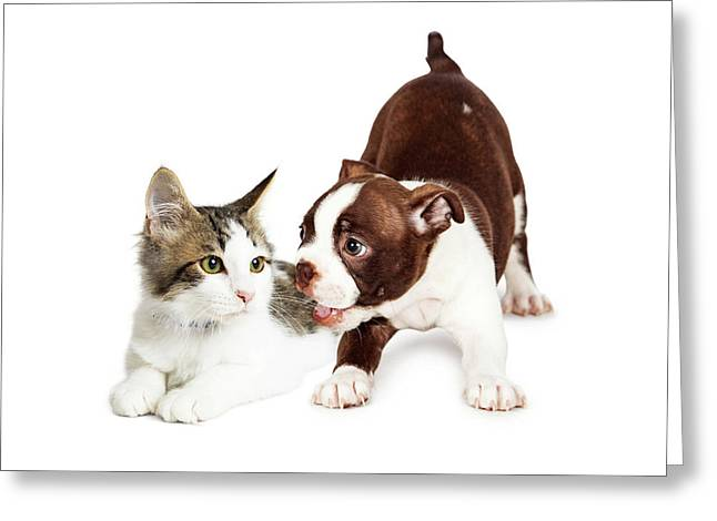 Playful Puppy And Annoyed Kitten Greeting Card by Susan Schmitz
