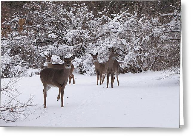 Hovind Greeting Cards - Playing in the Snow Greeting Card by Scott Hovind
