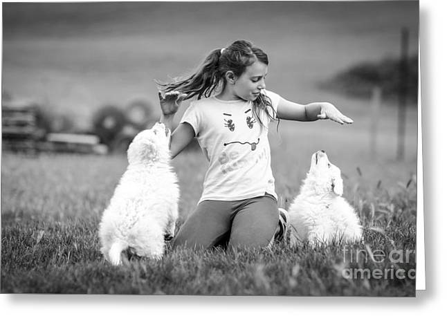White Greeting Cards - Playing with puppies Greeting Card by Ning Mosberger-Tang