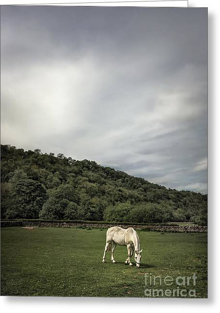 Lone Horse Photographs Greeting Cards - Pleasant Valley Sunday Greeting Card by Evelina Kremsdorf