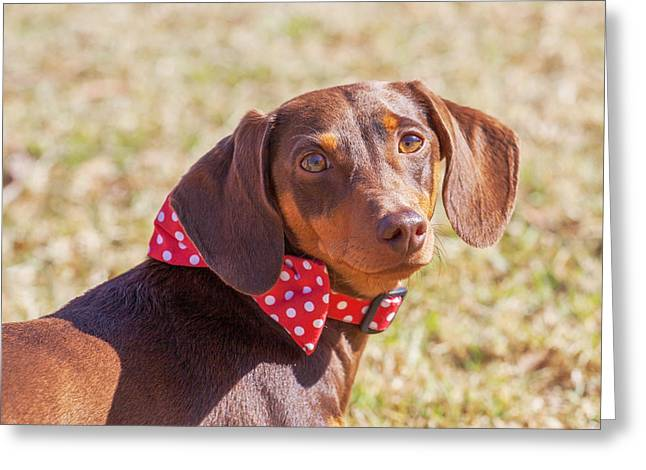 Puppies Photographs Greeting Cards - Please dont go Greeting Card by Tsvi Braverman