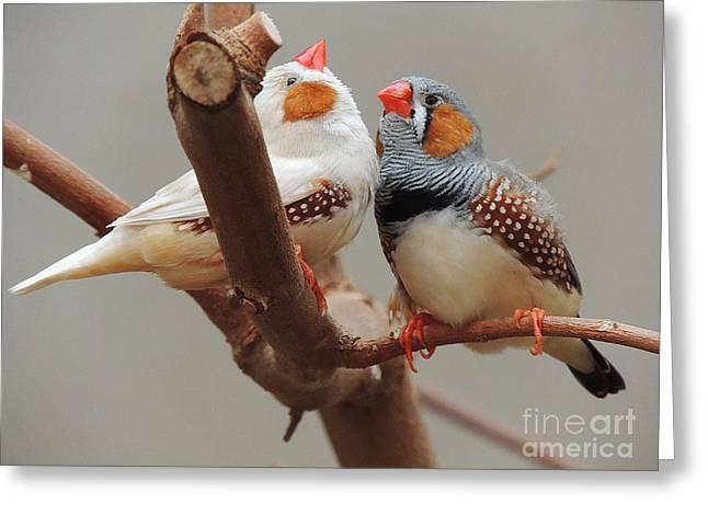 Zebra Finch Greeting Cards - Please Listen To Me Greeting Card by Alexandra Lavizzari