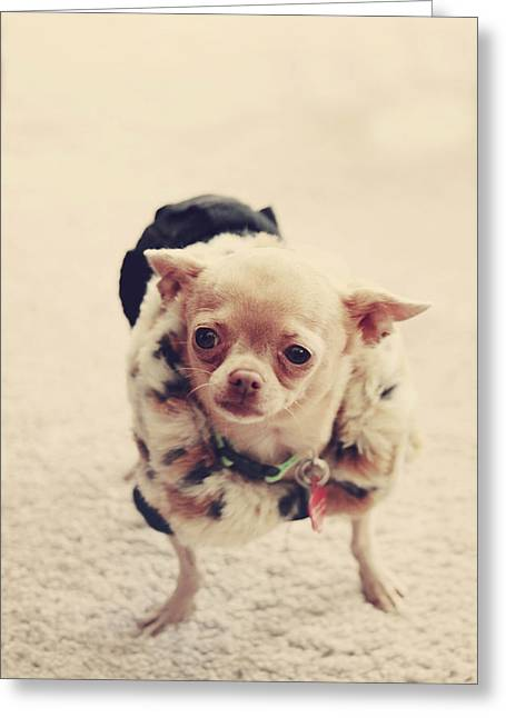 Chihuahua Portraits Greeting Cards - Please Meet Zoe Greeting Card by Laurie Search